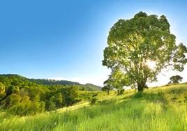 Montego Hills